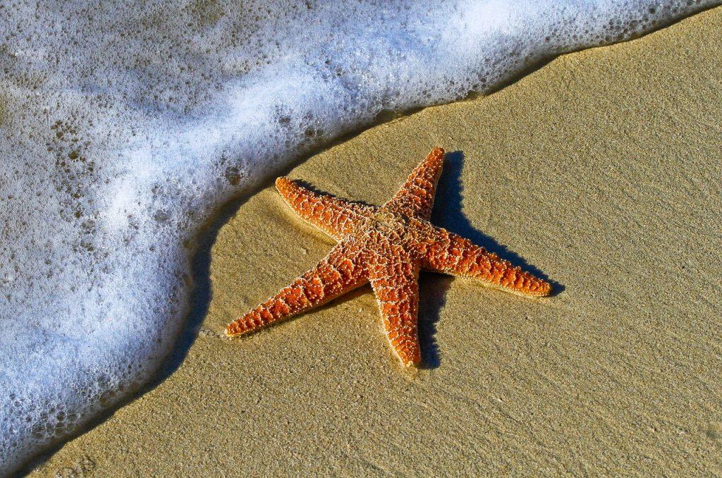 L'étoile, Petits contes de sagesse pour temps turbulents - Henri Gougaud